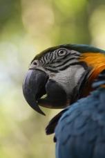 Wildlife at Iguazu