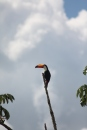 Wildlife at Iguazu