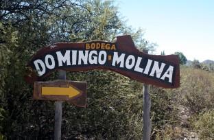 Bodega Domingo Molina