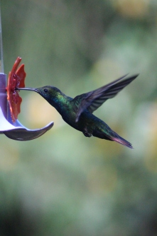 Humming Bird Sanctuary Iguazu