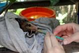 Lilo Feeding [50%]